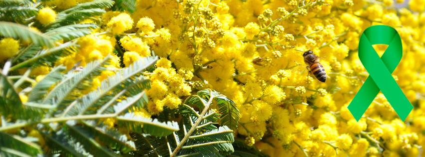 mimoza-poliklinika-gemini